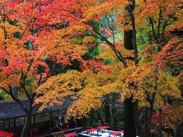 【備後地区発着】紅葉の「吉水園」秋の一般公開と広島なだ万御膳 日帰り<添乗員同行>