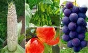 収穫体験 ※イメージ