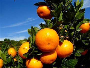 【群馬県内発着】秋の茨城フルーツ大収穫祭<添乗員同行>