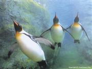 旭山動物園 ※イメージ