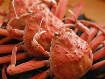 【大阪泉州地区発着】丹後・夕日ヶ浦温泉の旅館で味わう2枚のかにづくし料理<添乗員同行>
