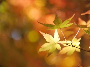 仁田峠紅葉散歩と幸せの黄色い列車王国島原半島6大グルメ食べ比べ<添乗員同行>