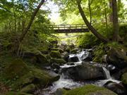 水源の森つくり体験:下草刈りなどを通じて森づくりのお手伝い♪マイナスイオンでリラックス
