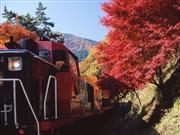 嵯峨野トロッコ列車 画像提供:嵯峨野観光鉄道 ※イメージ