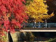 紅葉の高尾山※イメージ 画像提供:八王子市観光課
