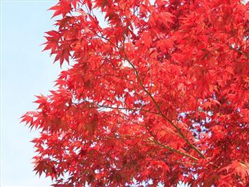 【福井県発着】秋色満開!丹波紅葉三山ぐるり周遊紀行<添乗員同行>
