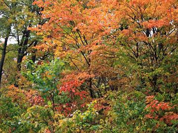 【福井県発着】紅に染まる湖東三山紅葉めぐりとライトアップ大本山「永源寺」<添乗員同行>