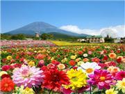 ◆天空のダリア祭り ぐりんぱ