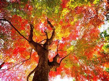 【大分・別府・県北・県南地区発着】「紅葉の森」と「ラピュタファーム」のランチバイキング「上野焼」の里・福智町 日帰り<添乗員同行>