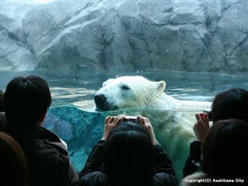 旭山動物園とライトアップ青い池&白ひげの滝 ~道の駅びえい「白金ビルケ」にも立ち寄り♪~【安心の1名様から催行!】