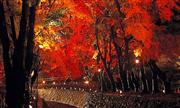 河口湖もみじ回廊ライトアップ(11月頃) ※イメージ