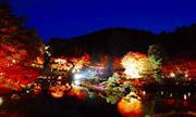 修善寺虹の郷ライトアップ(11月頃) ※イメージ