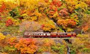 わたらせ渓谷鉄道トロッコ(11月頃)※イメージ