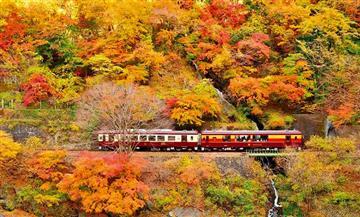 【はとバス】【トイレ付きバス・レガートで行く】紅葉を走るわたらせ渓谷トロッコと富弘美術館(池袋発)