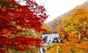 袋田の滝(11月頃)※イメージ