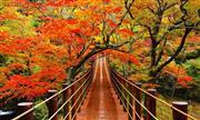 汐見滝吊橋(11月頃)※イメージ