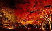 長瀞月の石もみじ公園ライトアップ(11月頃) ※イメージ