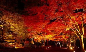 【はとバス】秩父鉄道SL列車&長瀞ラインくだりと月の石もみじ公園ライトアップ(池袋発)