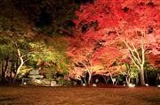 紅葉まつりイメージ