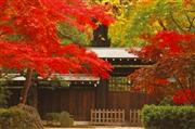 平林寺の紅葉 ※イメージ