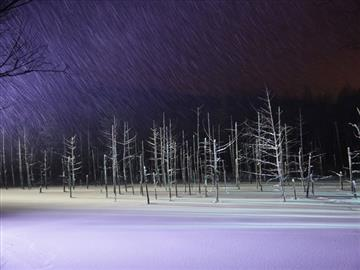 【富良野・美瑛物語】青い池の幻想的なライトアップとWINTER GARDENで見渡す限りの雪景色コース