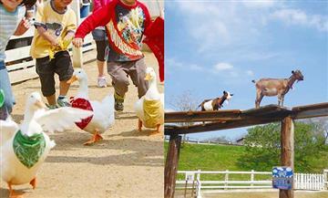 【はとバス】牧場の絶品チーズフォンデュ&ヤギの空中散歩と希少いちごチーバベリー狩り(京橋発)