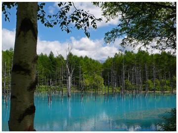 【富良野・美瑛物語】青い池・ファーム富田・白ひげの滝と富良野ワイナリーでランチ付コース♪