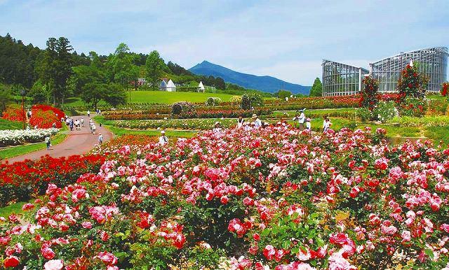 茨城県フラワーパーク ※イメージ