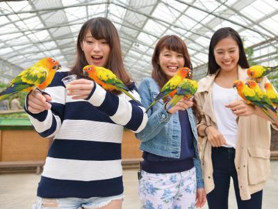 掛川花鳥園 ※イメージ