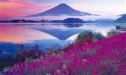 河口湖ハーブフェスティバル(7月頃) ※イメージ