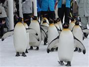 大人気のペンギン ※イメージ