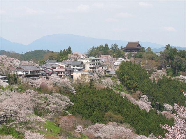 吉野山 千本桜 ※イメージ
