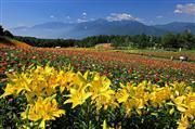 富士見高原リゾート ロマンスエリアイメージ