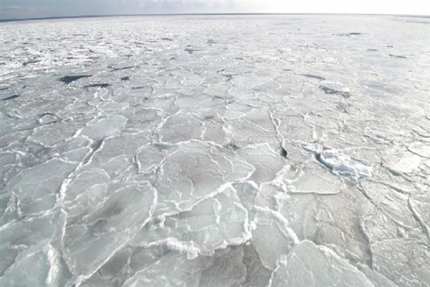 流氷を見に行こう!