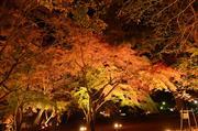 長瀞 紅葉祭りライトアップ
