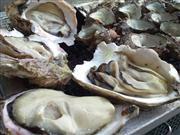 焼き牡蠣 ※イメージ