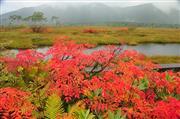 9月下旬~尾瀬の景色:イメージ画像