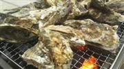 三陸産の新鮮な牡蠣食べ放題!