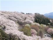 桜山公園 ※イメージ