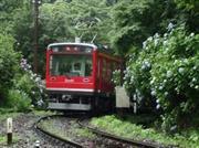 あじさい電車 ※イメージ