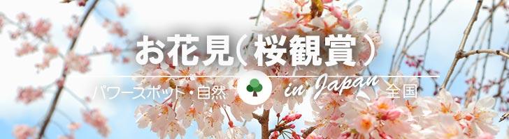 お花見(桜)
